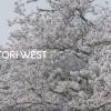 【鳥取県西部移住PRムービー】『暮らし篇』